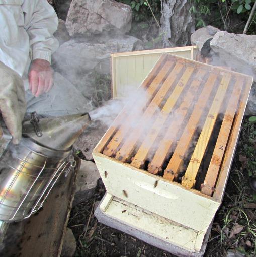 Bee Smoke