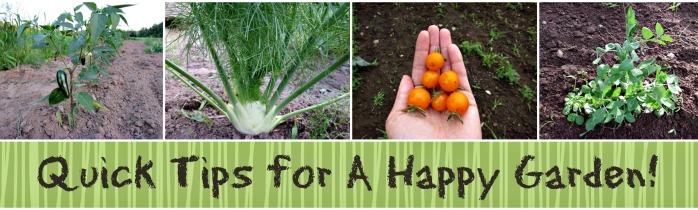 Quick Tips for A Happy Garden